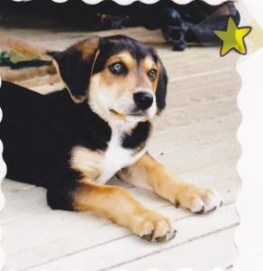 Ben as a puppy