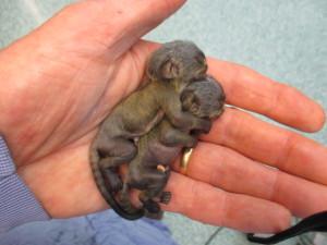 Gemini and babies (1)