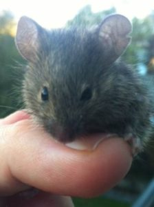 Mouse rescued from Stinky2