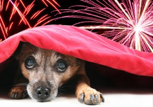 Do fireworks scare your pet?