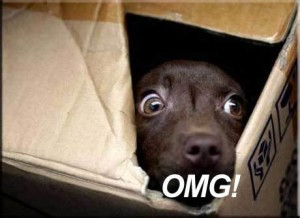 scared-boxed-puppy